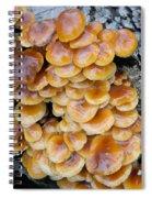 Big Mushrooms Family Spiral Notebook