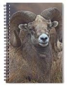 Big Rams Spiral Notebook