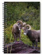Bighorn Ram 4 Spiral Notebook
