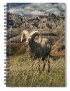 Bighorn Ram In The Badlands Spiral Notebook