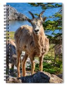Bighorn Sheep Of Lake Minnewanka Spiral Notebook