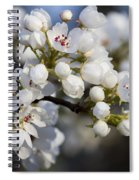 Billows Of Fluffy White Bradford Pear Blossoms Spiral Notebook