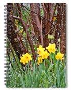 Birch And Daffiodils Spiral Notebook