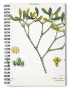 Birch And Mistletoe Spiral Notebook