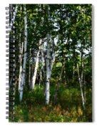 Birch Grove In The Sunlight Spiral Notebook