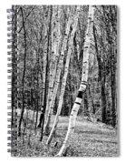 Birch Sentinels Spiral Notebook