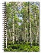 Birch Tree Grove In Summer Spiral Notebook