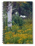 Birch Tree Spiral Notebook