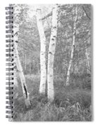 Birch Trees In A Forest, Acadia Spiral Notebook