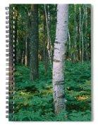 Birch Trees In A Forest Spiral Notebook