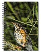 Bird - Baby Robin Spiral Notebook