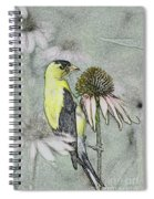 Bird Eating Seeds For One Digital Art Spiral Notebook