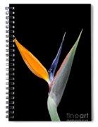 Bird Of Paradise #2 Spiral Notebook