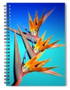 Bird Of Paradise 2013 Spiral Notebook