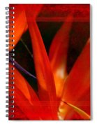 Bird Of Paradise Flower 5 Spiral Notebook