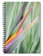 Bird Of Paradise Flower Bud Spiral Notebook