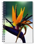 Bird Of Paradise Flower - Square Spiral Notebook