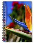 Bird Of Paradise Open For All To See Spiral Notebook