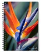 Bird Of Paradise - Strelitzia Reginae  Spiral Notebook
