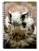 Bird Of Prey Flying Spiral Notebook