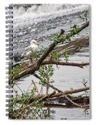 Bird On A Weir Spiral Notebook