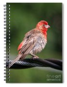 High Wire Act Spiral Notebook