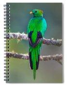 Bird Perching On A Branch, Savegre Spiral Notebook
