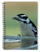 Birdbath Funtime Spiral Notebook