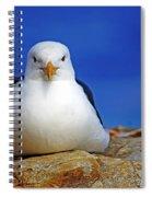 Birds 10 Spiral Notebook