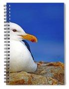 Birds 9 Spiral Notebook