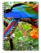 Birds Eye Spiral Notebook