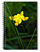 Bird's-foot Trefoil Spiral Notebook
