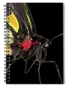 Birdwing Butterfly Spiral Notebook