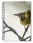 Birdy Birdy Goldfinch Spiral Notebook