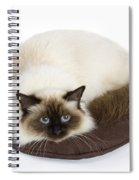 Birman Cat Spiral Notebook