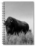 Bison Cow On An Overlook In Yellowstone National Park Black And White Spiral Notebook