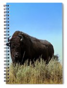 Bison Cow On An Overlook In Yellowstone National Park Spiral Notebook