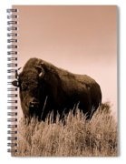 Bison Cow On An Overlook In Yellowstone National Park Sepia Spiral Notebook