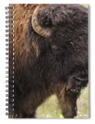 Bison From Yellowstone Spiral Notebook