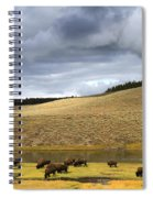 Bison Grazing Along The Yellowstone River In Hayden Valley Spiral Notebook