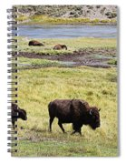 Bison Mother And Calf In Yellowstone National Park Spiral Notebook