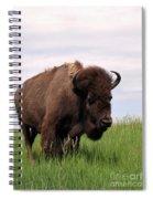 Bison On The Prairie Spiral Notebook