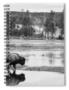 Bison Reflection Spiral Notebook