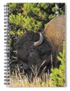 Bison's Portrait Spiral Notebook