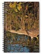 Bittern Stretched Out Spiral Notebook