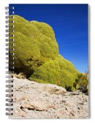 Bizarre Green Plant Bolivia Spiral Notebook