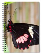 Black And Red Cattleheart Butterfly Spiral Notebook