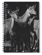 Black And White Antelopes Spiral Notebook