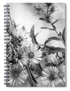 Black And White Asters Spiral Notebook