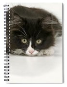 Black-and-white Cat Spiral Notebook